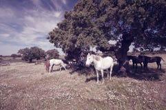 Cavalli che pascono nel campo un giorno soleggiato Fotografia Stock