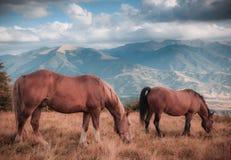 Cavalli che pascono nel pascolo in montagne Autumn Landscape Fotografia Stock Libera da Diritti