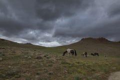 Cavalli che pascono vicino al lago chandrataal in valle di Spiti Immagini Stock Libere da Diritti