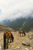Cavalli che si alimentano in montagne nuvolose immagine stock