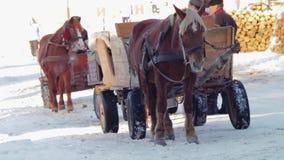 Cavalli che sono sfruttati al carretto di Hutsul stock footage