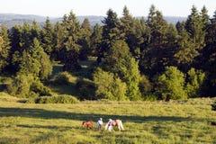 Cavalli con gli addestratori in erba - orizzontale Immagini Stock