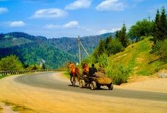 Cavalli con il carrello di legno sulla strada contro lo sfondo delle montagne, concetto degli animali domestici nell'ambiente nat Fotografia Stock Libera da Diritti