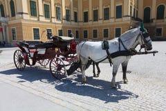 Cavalli con il carretto Immagine Stock
