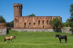 Cavalli con il castello nei precedenti Fotografie Stock