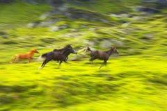 Cavalli correnti fotografie stock
