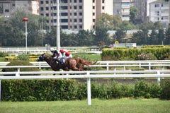 Cavalli da corsa che si accelerano sul giro finale verso la linea di affinamento Fotografia Stock