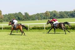 Cavalli da corsa sulla pista di Partynice Fotografia Stock Libera da Diritti
