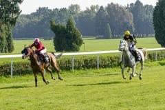 Cavalli da corsa sulla pista di Partynice Immagine Stock Libera da Diritti
