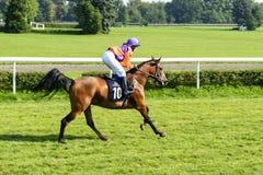 Cavalli da corsa sulla pista di Partynice Immagini Stock