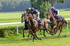 Cavalli da corsa sulla pista di Partynice Fotografia Stock