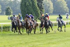 Cavalli da corsa sulla pista di Partynice Immagini Stock Libere da Diritti