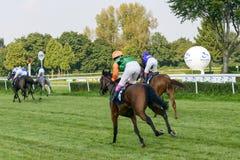 Cavalli da corsa sulla pista di Partynice Immagine Stock