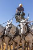 Cavalli da tiro ed il driver Fotografia Stock Libera da Diritti
