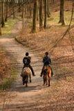 Cavalli danesi Fotografia Stock Libera da Diritti