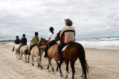 Cavalli danesi sulla spiaggia Fotografia Stock