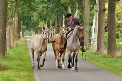Cavalli del creolo Immagine Stock