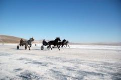 Cavalli del Thoroughbred Fotografia Stock Libera da Diritti
