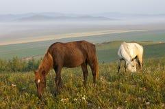 Cavalli delle coppie Fotografia Stock Libera da Diritti