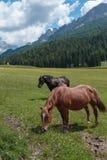 Cavalli di Brown che pascolano nelle terre di pascolo: Paesaggio italiano delle alpi delle dolomia Fotografia Stock Libera da Diritti