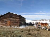 Cavalli di cambiale in iarda stabile Fotografie Stock Libere da Diritti