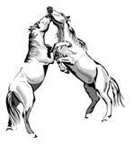 Cavalli di combattimento Fotografia Stock Libera da Diritti
