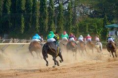 cavalli di corsa che iniziano una corsa Immagine Stock