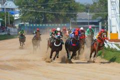 cavalli di corsa che iniziano una corsa Fotografia Stock Libera da Diritti