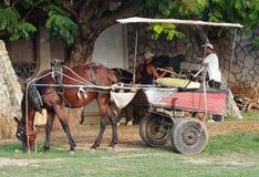 Cavalli di Cuba Immagine Stock Libera da Diritti