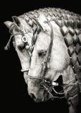 Cavalli di dancing del Messico & di Guadalajara immagini stock libere da diritti