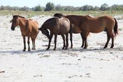 Cavalli di delta del Danubio Fotografie Stock Libere da Diritti