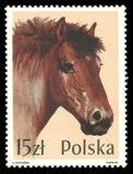 Cavalli di serie, cavallo delle Ardenne Fotografia Stock Libera da Diritti