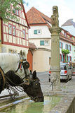Cavalli di trasporto che bevono dalla fontana di pietra Fotografia Stock