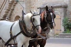 Cavalli di trasporto davanti alla parete di pietra Immagine Stock