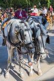 Cavalli e carrelli Fotografia Stock Libera da Diritti