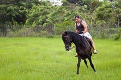 Cavalli e cavalieri fotografie stock