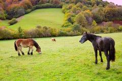 Cavalli e mucche che pascono nei prati di Pirenei alla Spagna Fotografia Stock
