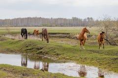 Cavalli e puledro che pascono nel pascolo fotografia stock
