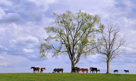 Cavalli ed alberi Immagini Stock Libere da Diritti