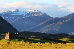 Cavalli ed azienda agricola abbandonata Fotografie Stock