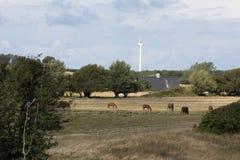 Cavalli ed energia Immagine Stock Libera da Diritti