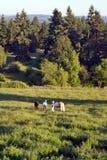 Cavalli in erba ed in alberi - verticale Immagini Stock