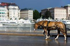 Cavalli faticosi sul lavoro fotografie stock libere da diritti