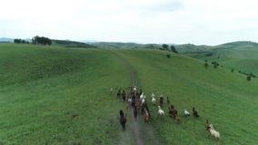 Cavalli fatti funzionare all'orizzonte video d archivio