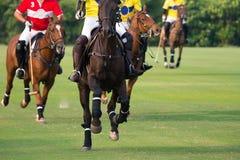 Cavalli fatti funzionare in cavallo Polo Sport immagine stock