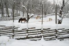 Cavalli in inverno Immagine Stock Libera da Diritti