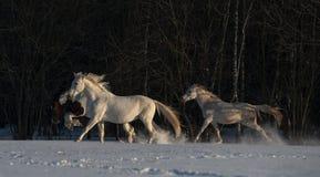 Cavalli in inverno Immagini Stock Libere da Diritti