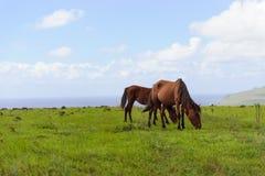 Cavalli Isla de Pascua Rapa Nui Isola di pasqua Threesome Fotografia Stock
