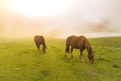 Cavalli in laghi di Covadonga Asturias, Spagna fotografie stock