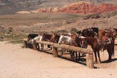 Cavalli legati in su con le montagne Fotografia Stock Libera da Diritti